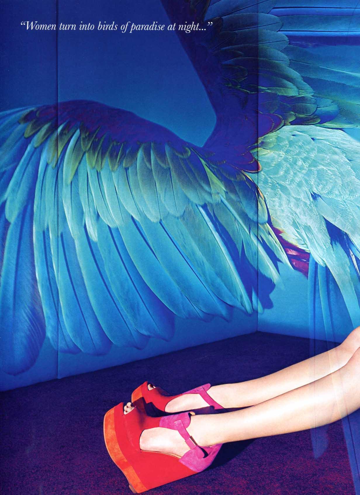 paradise birds models